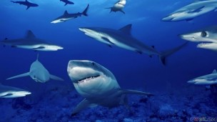 thumb3_sharks__1