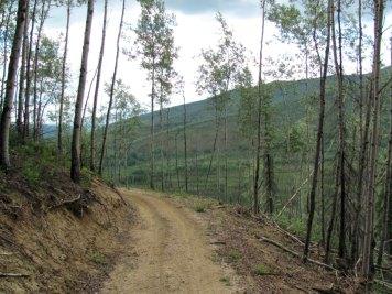 Angel-Creek-Hillside-Trail