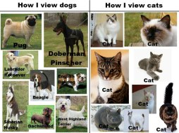 dogs_vs_cats_11