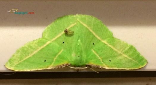 20140805-hubert-the-moth