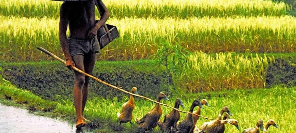 Walking in the rice fields :)