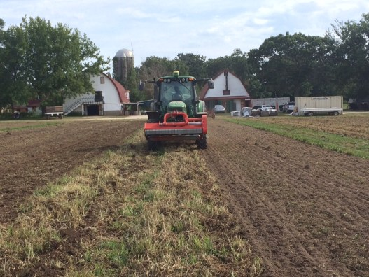 Primo works up a cover crop of alfalfa and clover to prepare growing beds for 2016. Thirty-three fields will be tilled this August, then receive compost, and then be seeded to peas by September 1st for added fertility.