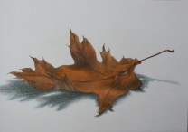 """Oak Leaf""9x12 Coloured Pencil on Paper"