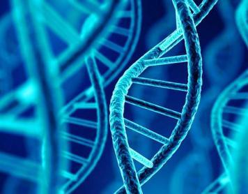 La secta de los Elohim y la clonación humana