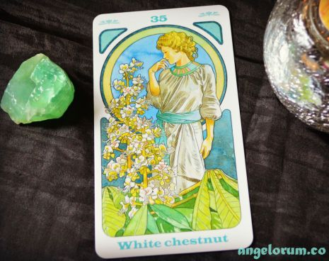 White Chestnut Bach Flower Oracle