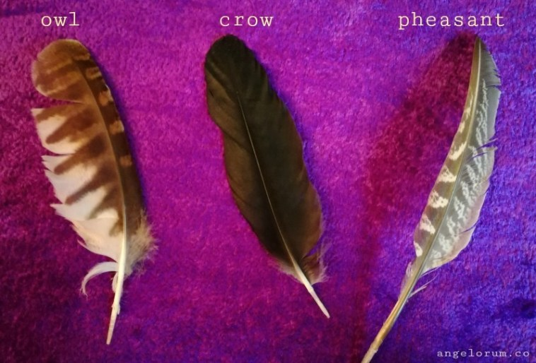 Pick a Feather for Your FREE Week Ahead Message