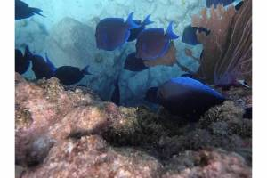 PK snorkeling 6