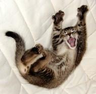 Yawning-cat2