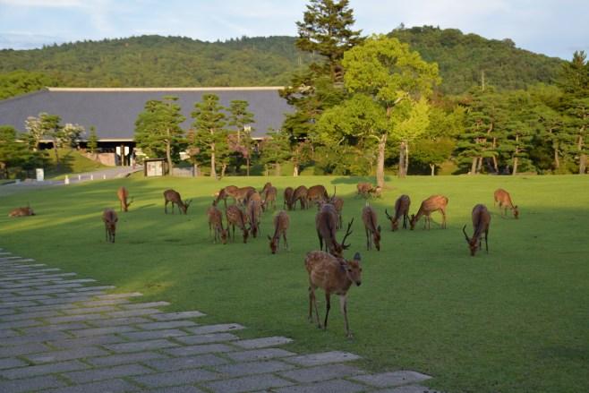 Parque Nara-köen