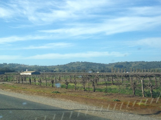 Around Tanunda, Barossa Valley, August 2014