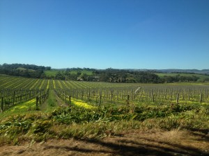 Spring in the Barossa Valley, September 2014