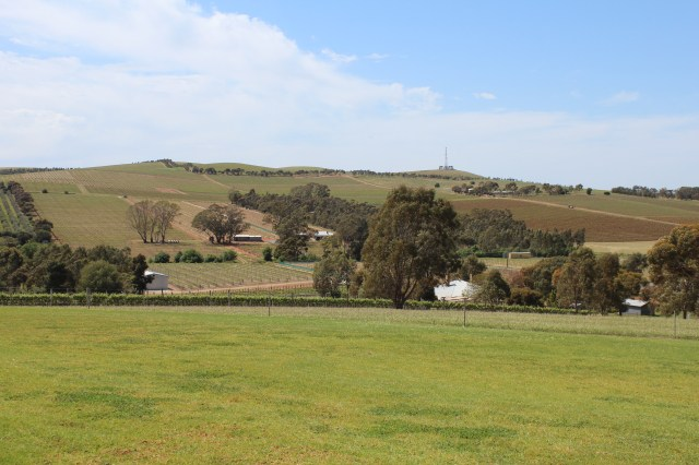 View from the cellar door at O'Leary Walker