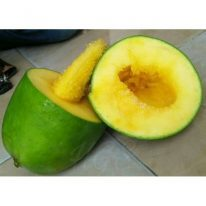 Tanaman buah mangga alpukat