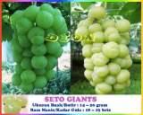 Buah Anggur giants
