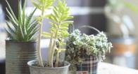 どこでも買える植物をおしゃれにデコる方法