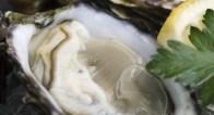 牡蠣は一日5個食べるべき!女性に嬉しい牡蠣の美容効果とは?