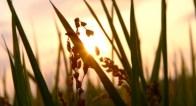 【開運】秋にぜひ!成功する人間の「お米」の食べかた【9月2日~6日】