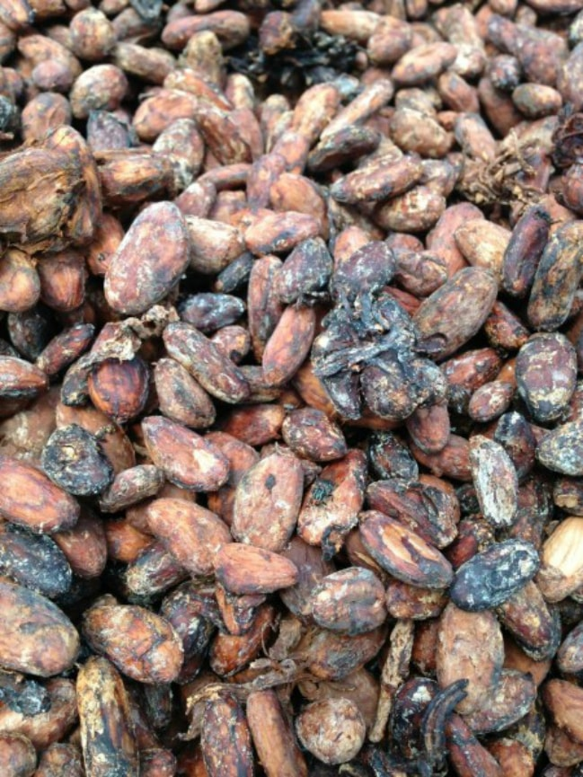 Dominican Republic cacao