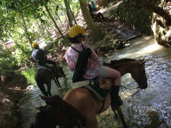 Horsing around in the jungle