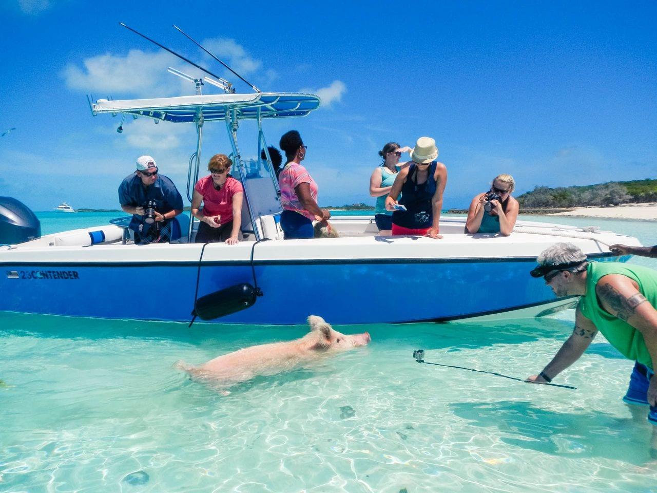 Swimming pigs Exuma