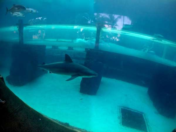 Have you ever seen a cooler water slide? AND you can scuba dive in this tank.