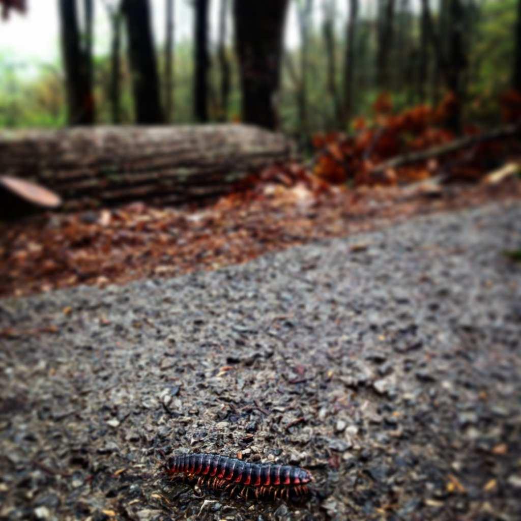 Smoky Mountain Park bugs