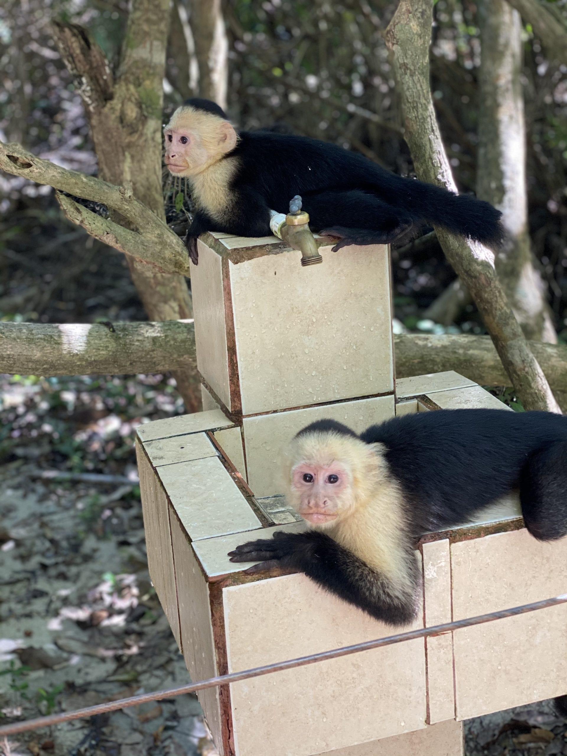 Cute-Monkeys-in-Manuel-Antonio-Costa-Rica