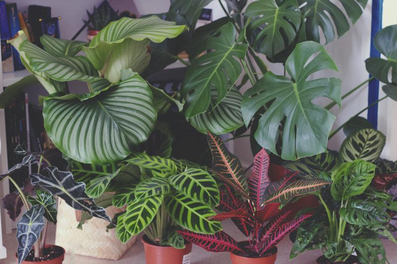 Mes cinq plantes d'intérieures préférées