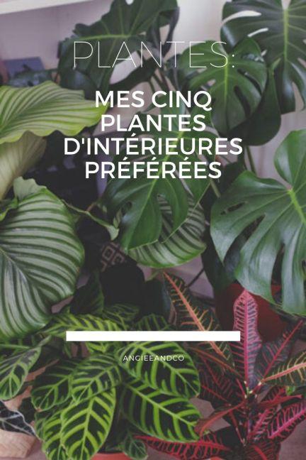 Epingle Pinterest pour mon article sur mes plantes d'intérieures préfèrées