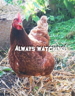 chicken_nettles.jpg
