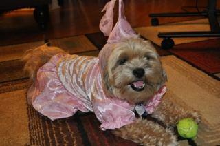 Roxy Halloween