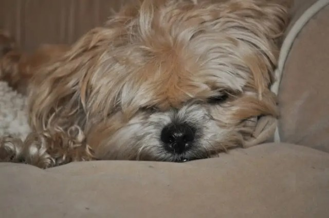 grumpy face of puppy