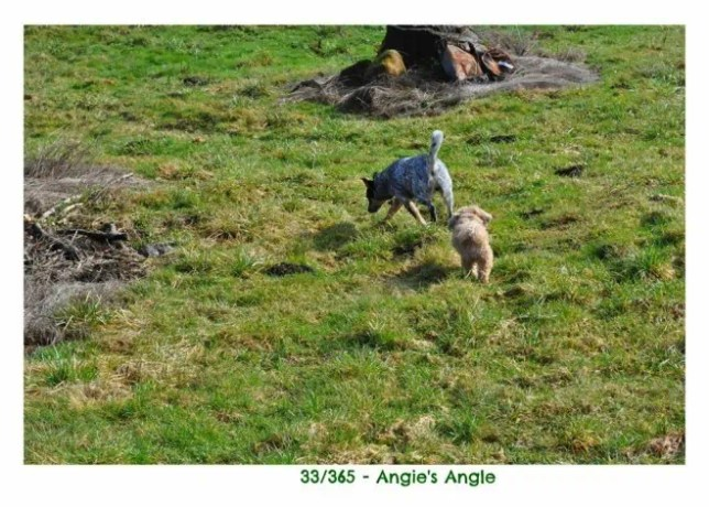 Day 33 - Roxy & Patch Playing - Angie's Angle