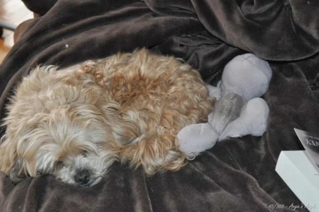 Day 45 - Roxy had to sleep with Hippo on the couch - Angie's Angle