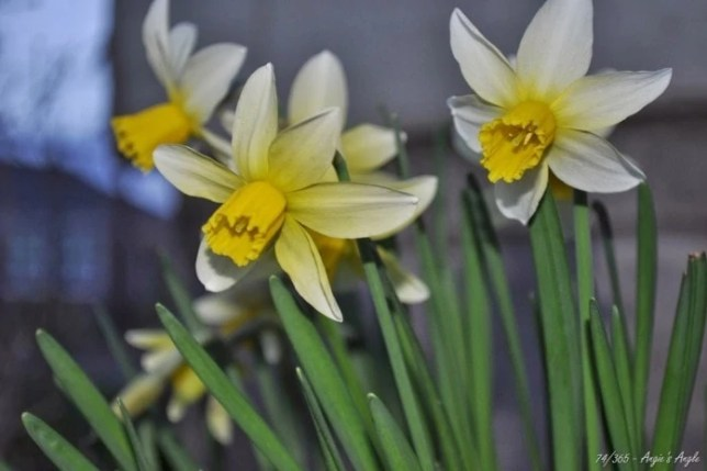 Day 74 - Another sign of spring
