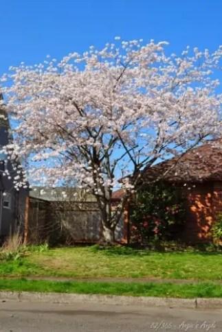 Day 82 - Pretty Spring Tree