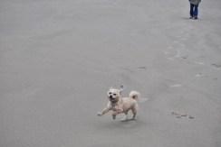Sunday Beach Trip - Wind and Rain (35)