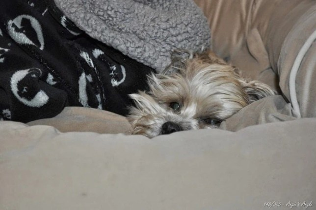 Day 148 - Roxy after digging out in bed