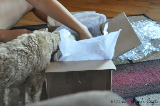 Catch the Moment 365 - Day 191 - A box for Roxy
