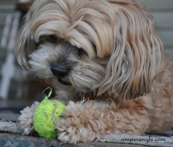 Ball Skilled Puppy – I got skills, I know it – Wordless Wednesday