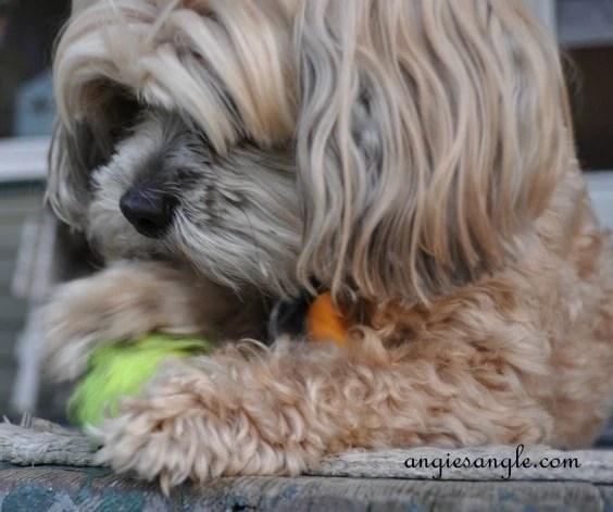 Wordless Wednesday - Roxy Batting the Ball (8)