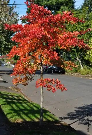 Fall is in the Air, Barely #blogboost