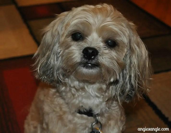 I love my Dog Shampoo - Clean Puppy