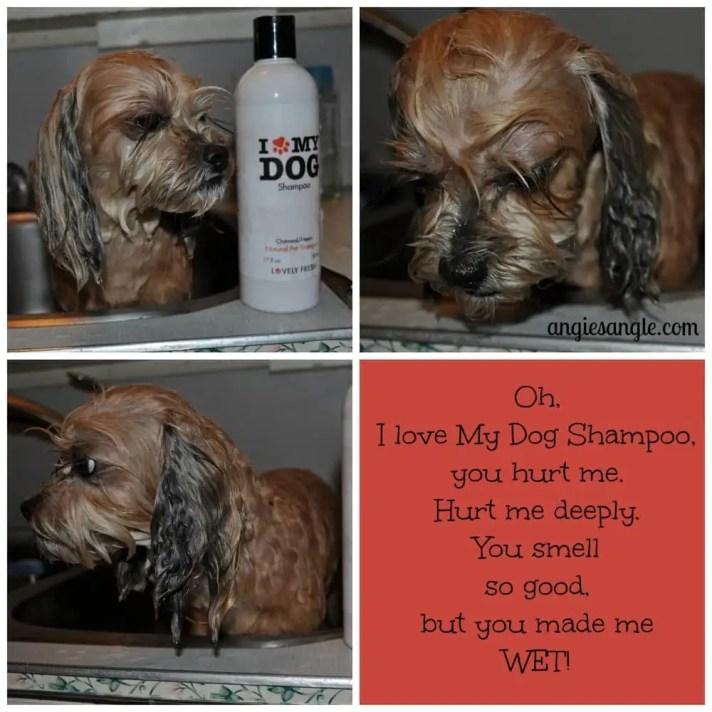 I love my Dog Shampoo - Shameful