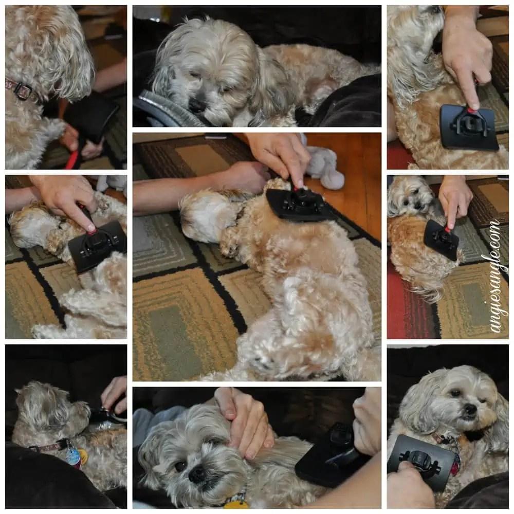 Epica Pet Brush - Brushing Roxy