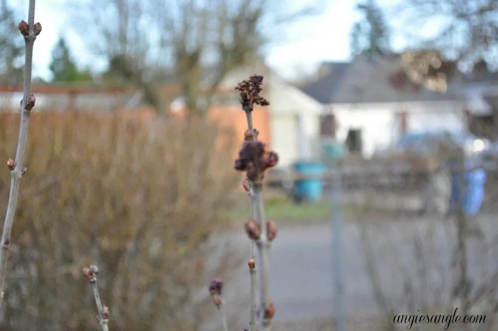 Project 52 – Week 3 – Out of Focus