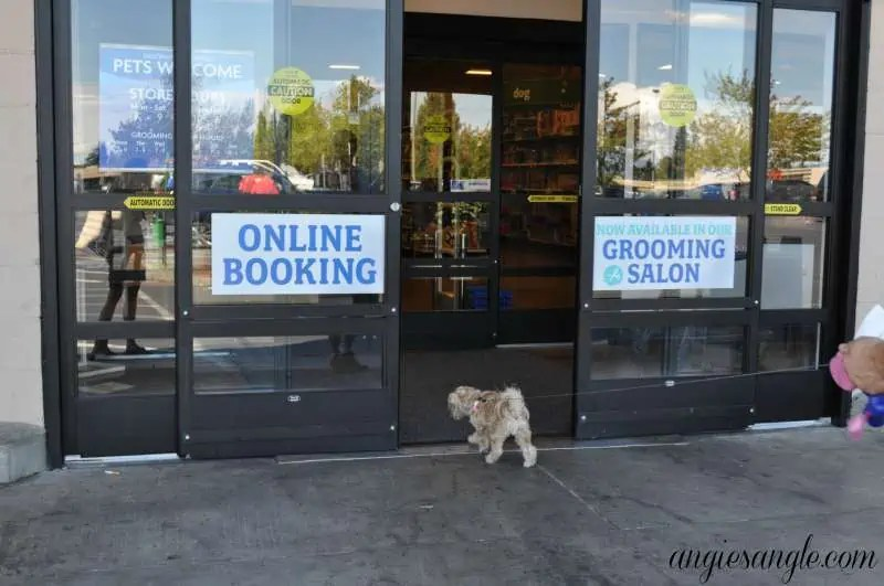 Switching Your Dog To A New Food - Heading Into Petsmart