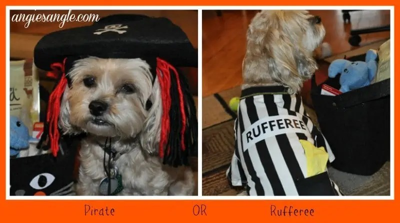 How to Fill a Halloween Bag For Your Dog - Costumes