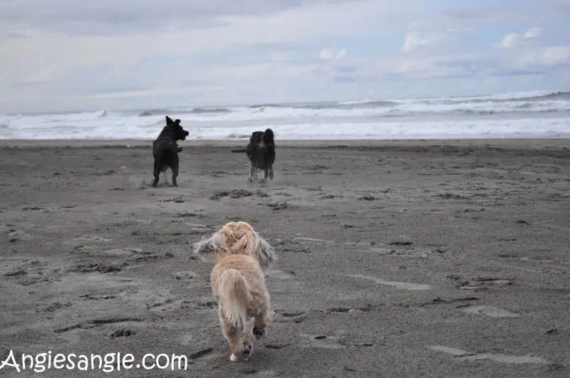 catch-the-moment-366-week-40-day-277-dogs-on-the-beach