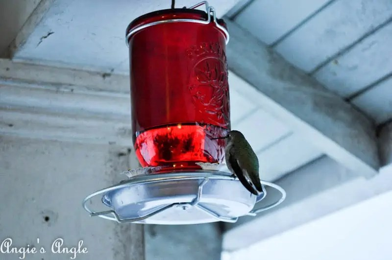 2017 Catch the Moment 365 Week 2 - Day 13 - Hummingbird